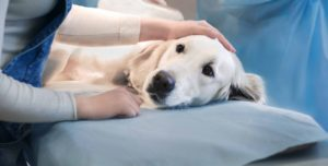 How to Choose the Best Online Pet Pharmacy?