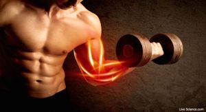 Does Fitness Supplements Work